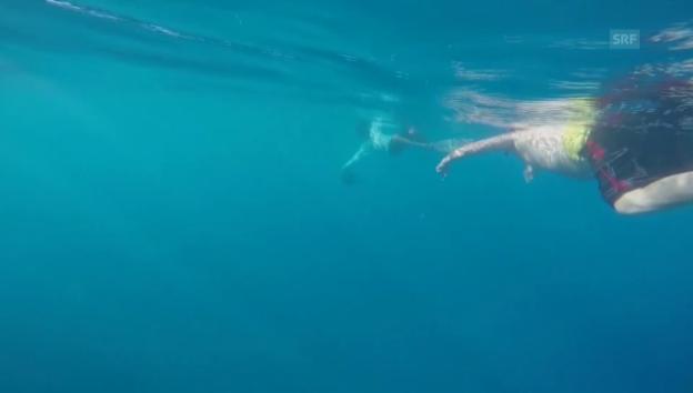 Video «Abtauchen mit den Delfinen (unkommentiert)» abspielen