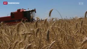 Video « Agrarbericht: Bauernsterben und stabiles Einkommen» abspielen