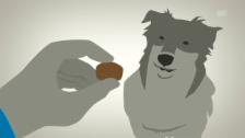 Video «Dicke Tiere» abspielen