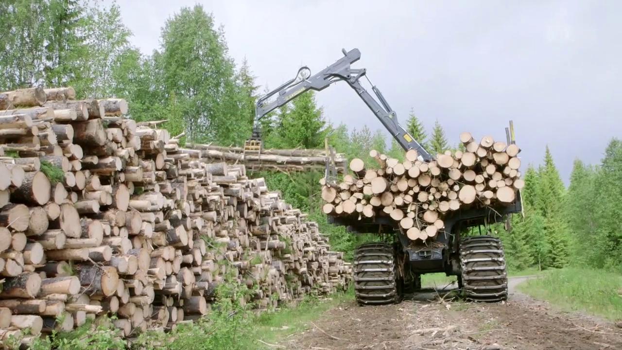 Rücksichtsloses Abholzen für unser WC-Papier: Der Umwelt-Report