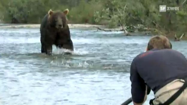 Video «Die Grizzlies im Fokus (2)» abspielen