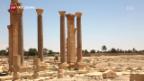 Video «Augenschein im geplünderten Palmyra» abspielen