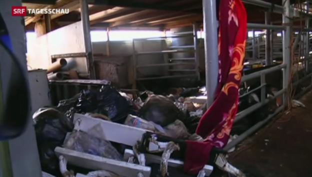 Video «Bilder aus dem Innern des Frachters zeigen die Skrupellosigkeit» abspielen