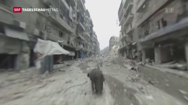 Video «Rebellen fordern eine Feuerpause» abspielen