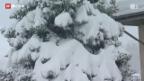 Video «Zu viel Schnee für Christbäume» abspielen