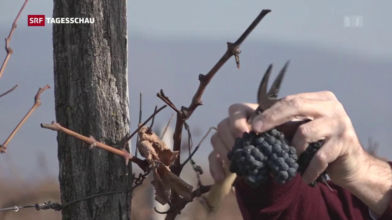 Georgischer Wein