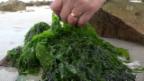 Video «Algen und Insekten als Futtermittel» abspielen