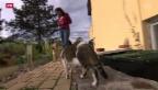 Video «Basler Tierschutz lanciert Notfallkarte für Haustiere» abspielen