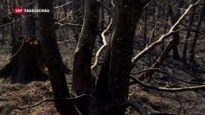 Video «Brände wegen Trockenheit» abspielen