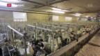 Video «Import von Stopfleber weiterhin erlaubt» abspielen