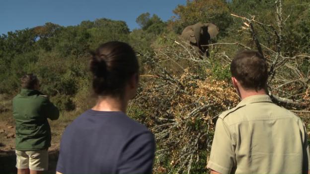 Video «Pätagei in Südafrika – Elefanten» abspielen