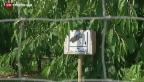 Video «Früchteklau in Frankreich» abspielen