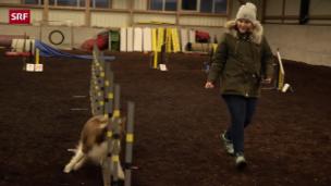Video «Traumberuf Hundetrainerin» abspielen