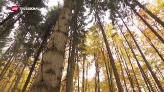 Video «Wald und Klimawandel» abspielen