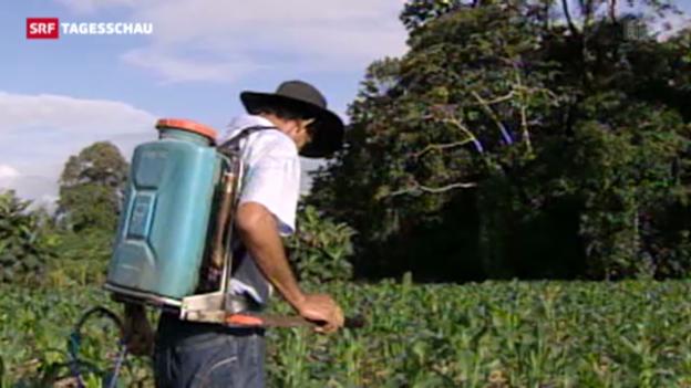 Video «Massnahmen gegen Bienensterben gefordert» abspielen