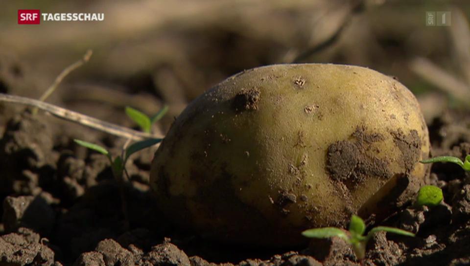 WWF fordert weniger Verschwendung von Lebensmitteln