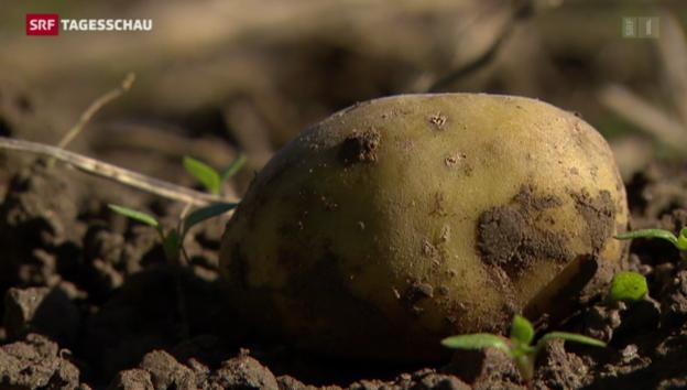Video «WWF fordert weniger Verschwendung von Lebensmitteln» abspielen