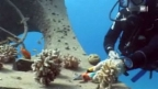 Video «Die Korallen-Retter am Roten Meer» abspielen