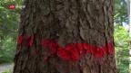 Video «Die Schweiz hat den Borkenkäfer im Griff» abspielen