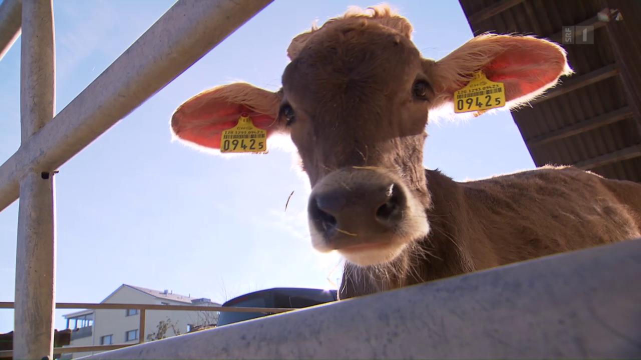 Schweiz - Antibiotika im Tierstall – ein Risiko für den Menschen ...