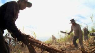 Link öffnet eine Lightbox. Video Eine Gewerkschaft für die Zuckerrohrarbeiter in Bolivien abspielen.
