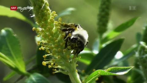 Bienen: Gärten mit und ohne Gift (3/3)