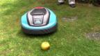 Video «Rasenroboter im Crashtest: Der kleine Igel» abspielen