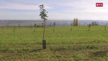 Laschar ir video «+3° - Agricultura da damaun»