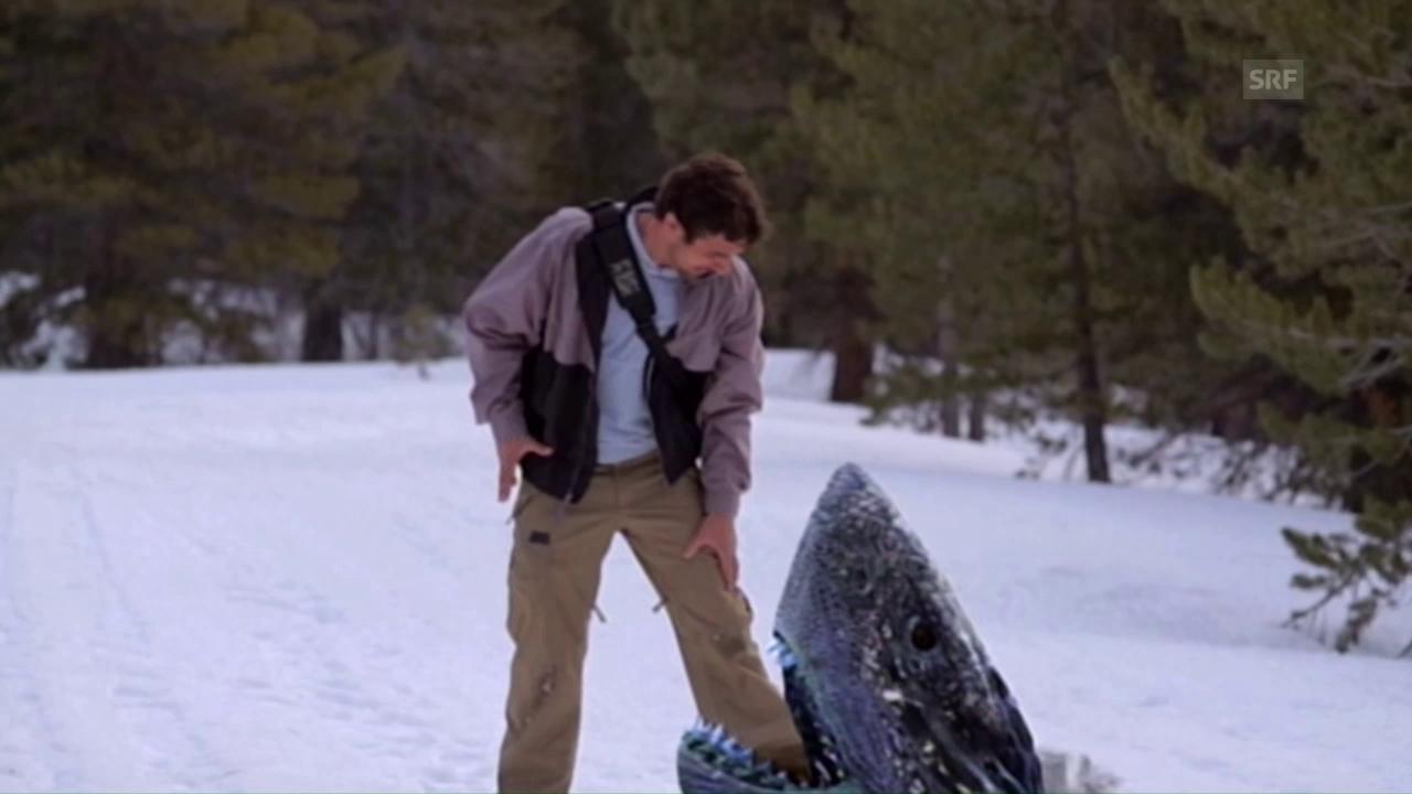 «Snow Sharks»