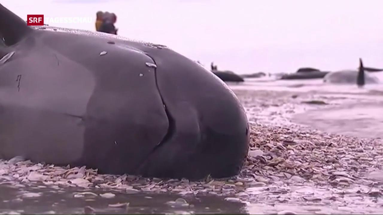 Hunderte tote Wale