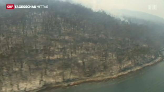 Video «Waldbrände in Australien» abspielen