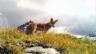 Video «Wild Cam: Highlights Teil 2» abspielen