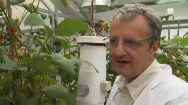 Arnold Schori über Soja-Anbau in der Schweiz