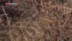 Video «Trockenheit als Naturgefahr» abspielen