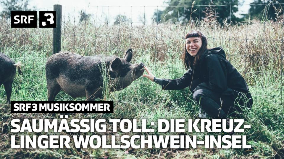 Saumässig toll: die Kreuzlinger Wollschwein-Insel   SRF 3 Musiksommer