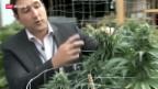 Video «US-Staaten im Cannabis-Rausch» abspielen