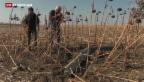 Video «Streubomben-Vorwürfe im Ukraine-Konflikt» abspielen