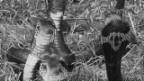 Video ««ECO kompakt»: Cobra-Effekt» abspielen