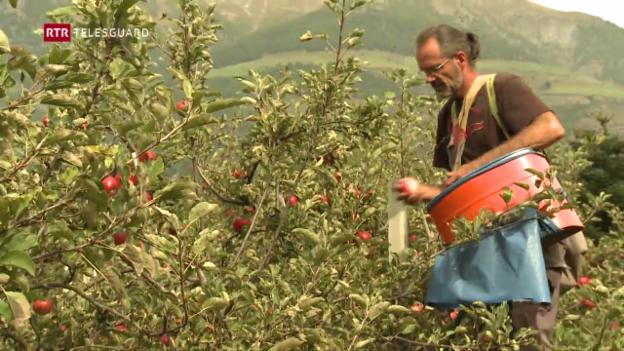 Laschar ir video «Attatga cun pesticids en il Tirol dal Sid»