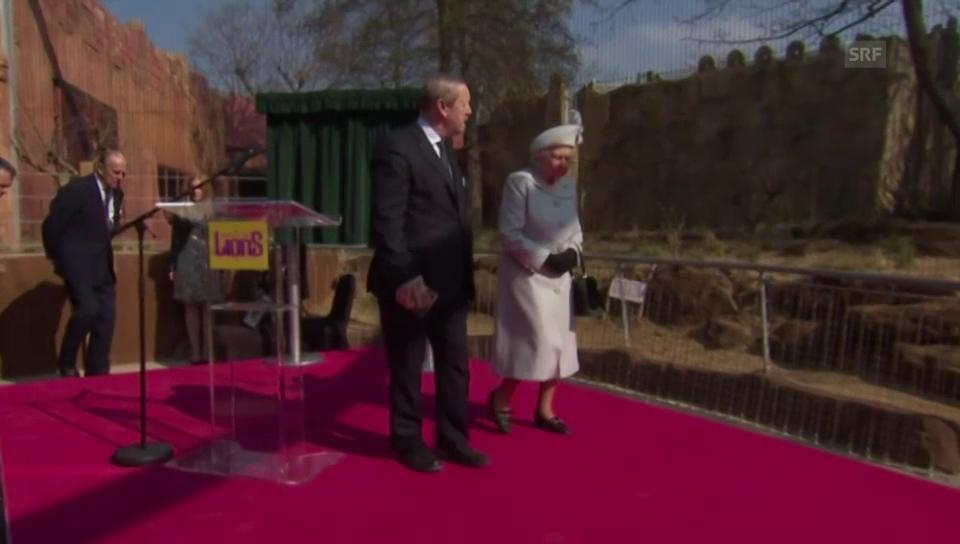Queen Elizabeth eröffnet Löwengehege
