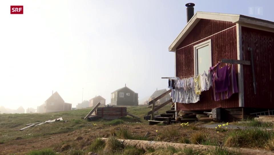 SOMMERSERIE: Eisbären und dicker Nebel