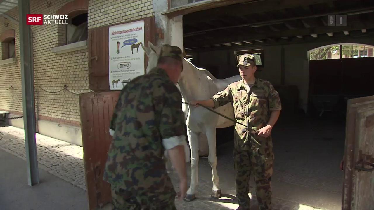 Pferde von Ulrich K. werden verkauft