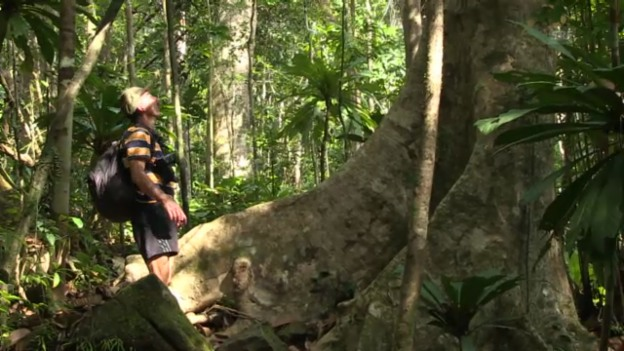 Video «Kurator Bauert im Masoala-Regenwald («Einstein»)» abspielen