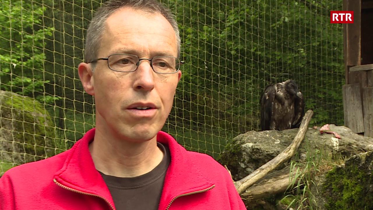 Martin Wehrle - quant original è il tschess barbet dad oz?