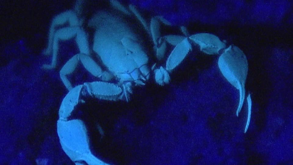 Tierisches Jahr: Skorpion im Juli (6/6)