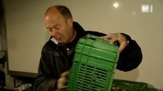 Video «Ruedi Käser: Ein Bauer als Marketing-Genie» abspielen