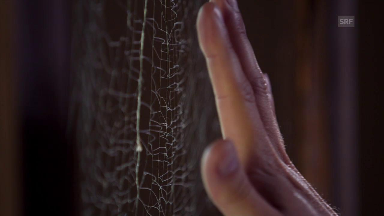 Wie werden Spinnennetze zur tödlichen Falle?