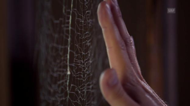 Video «Wie werden Spinnennetze zur tödlichen Falle?» abspielen
