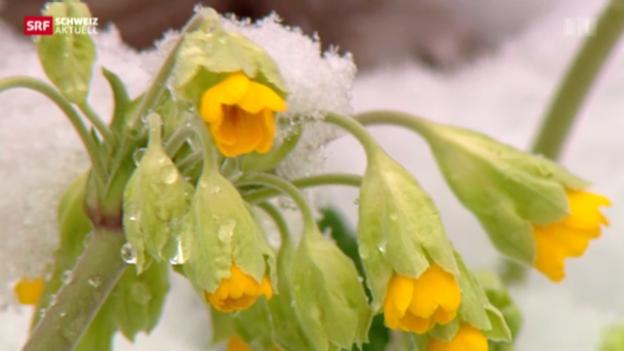 Video «Kein Frühlingserwachen» abspielen