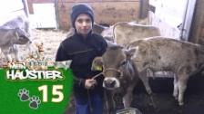 Video «Flurin und seine Kuh» abspielen
